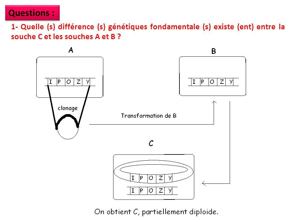 1/ Les différences génétiques qui existent entre les souches A et B puis C sont: -Les souches A et B sont haploïdes, la souche C est partiellement diploïde.