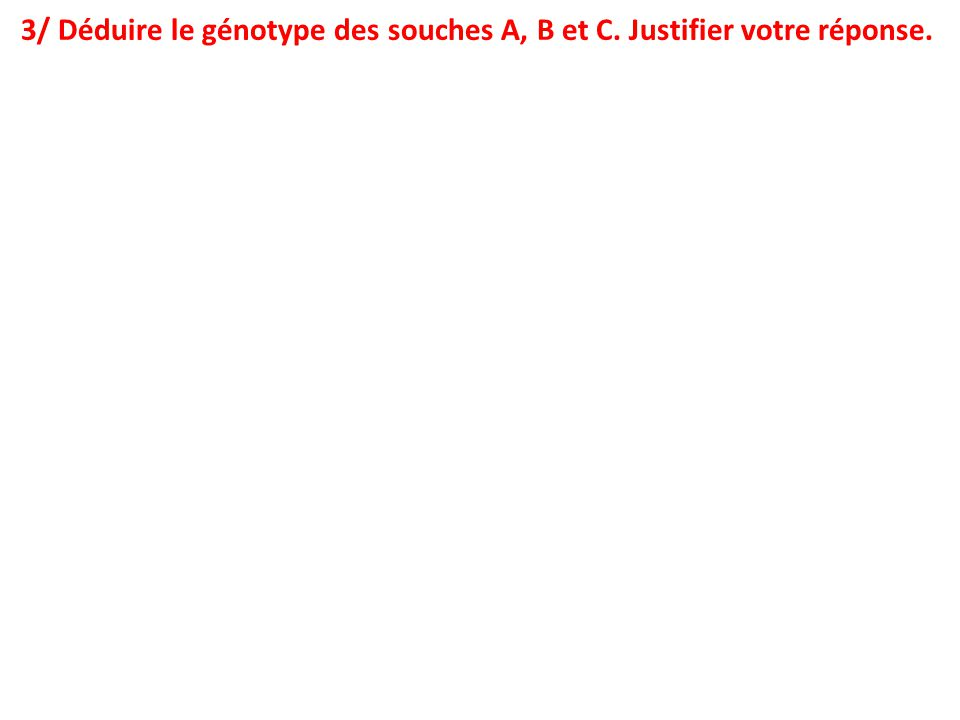 3/ Déduire le génotype des souches A, B et C. Justifier votre réponse.