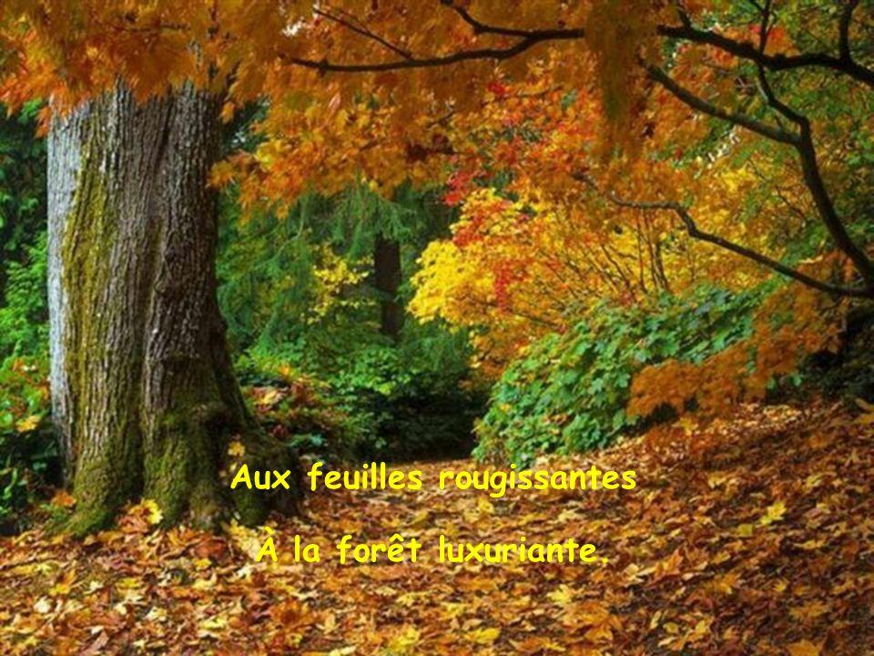 Et il y a l automne dans toute sa splendeur L automne aux mille couleurs