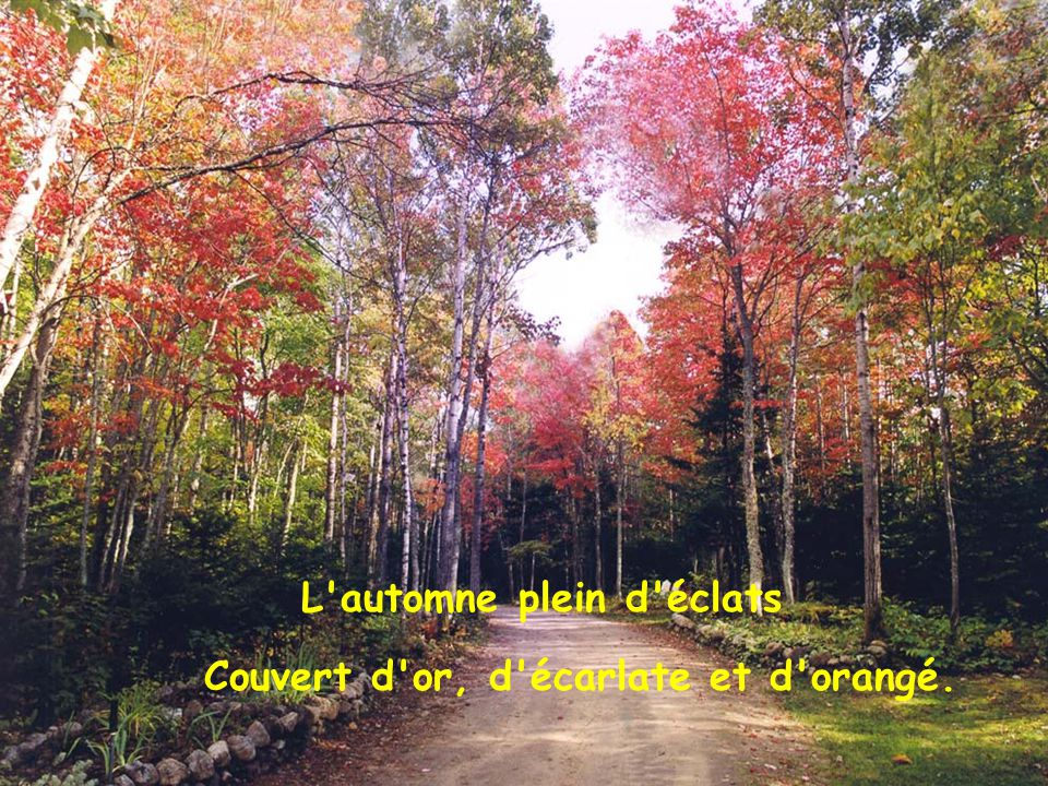 Aux feuilles rougissantes À la forêt luxuriante.