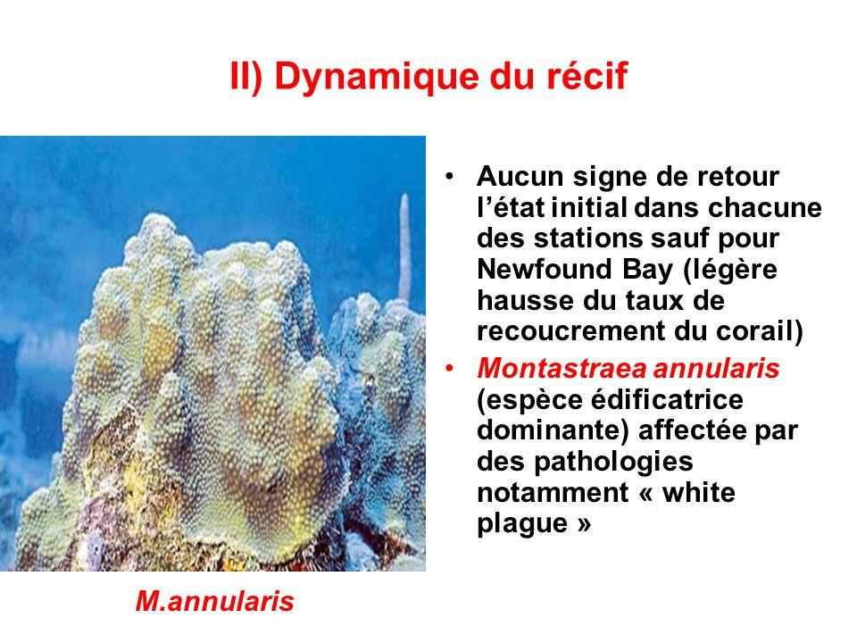 II) Dynamique du récif •Aucun signe de retour l'état initial dans chacune des stations sauf pour Newfound Bay (légère hausse du taux de recoucrement du corail) •Montastraea annularis (espèce édificatrice dominante) affectée par des pathologies notamment « white plague » M.annularis