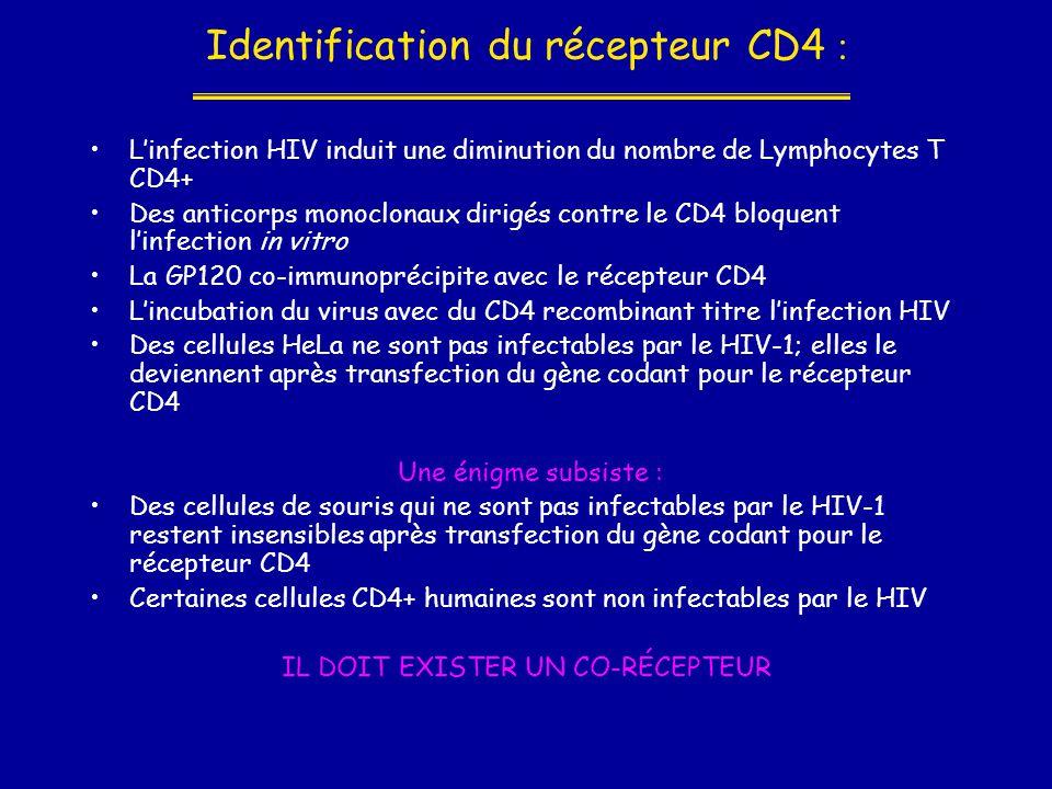 Identification du récepteur CD4 : •L'infection HIV induit une diminution du nombre de Lymphocytes T CD4+ •Des anticorps monoclonaux dirigés contre le