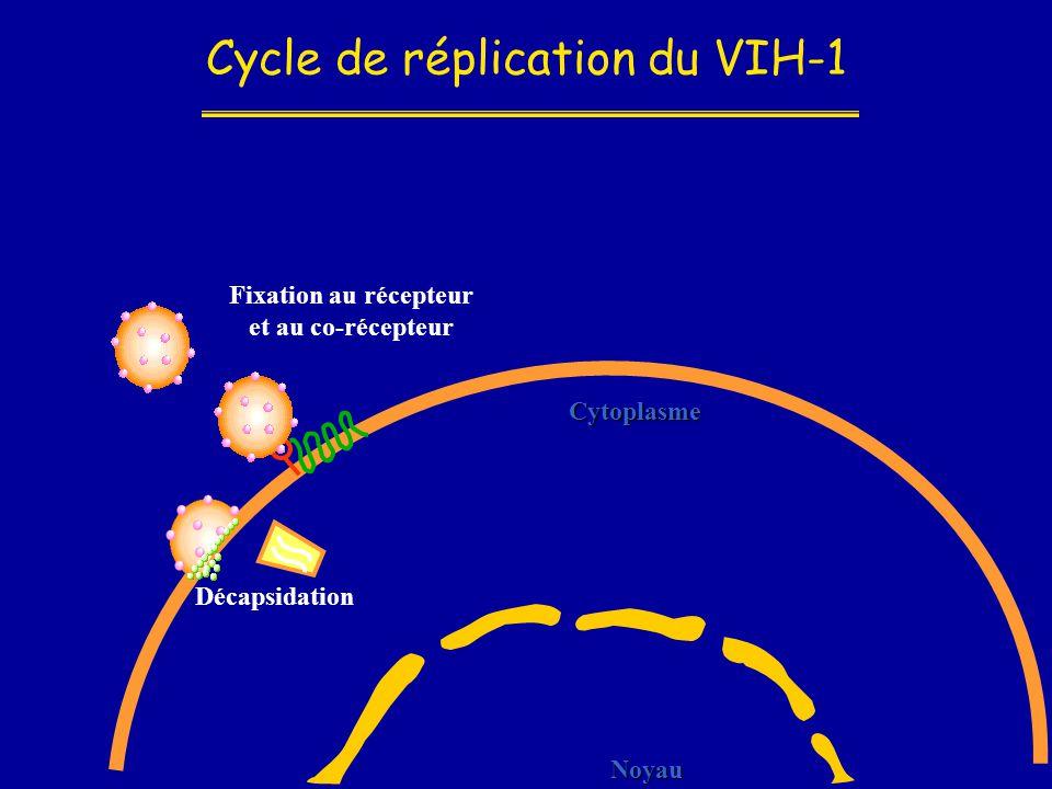 Cycle de réplication du VIH-1 Noyau Cytoplasme Fixation au récepteur et au co-récepteur Décapsidation