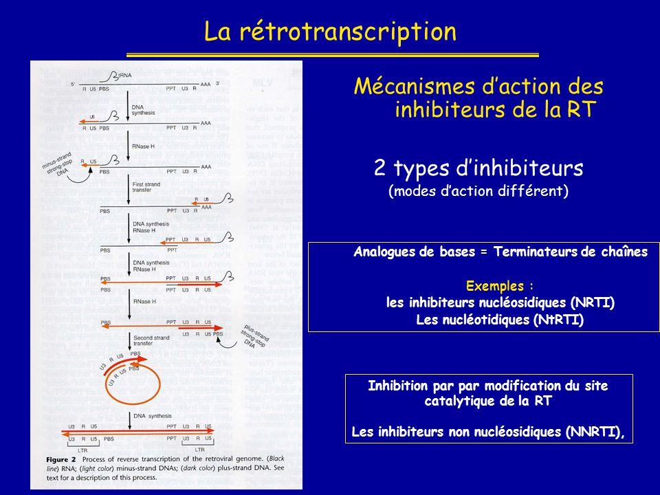 La rétrotranscription Mécanismes d'action des inhibiteurs de la RT 2 types d'inhibiteurs (modes d'action différent) Analogues de bases = Terminateurs