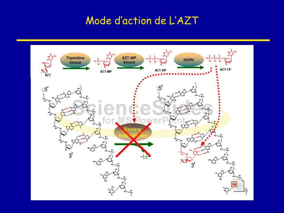 Mode d'action de L'AZT N3