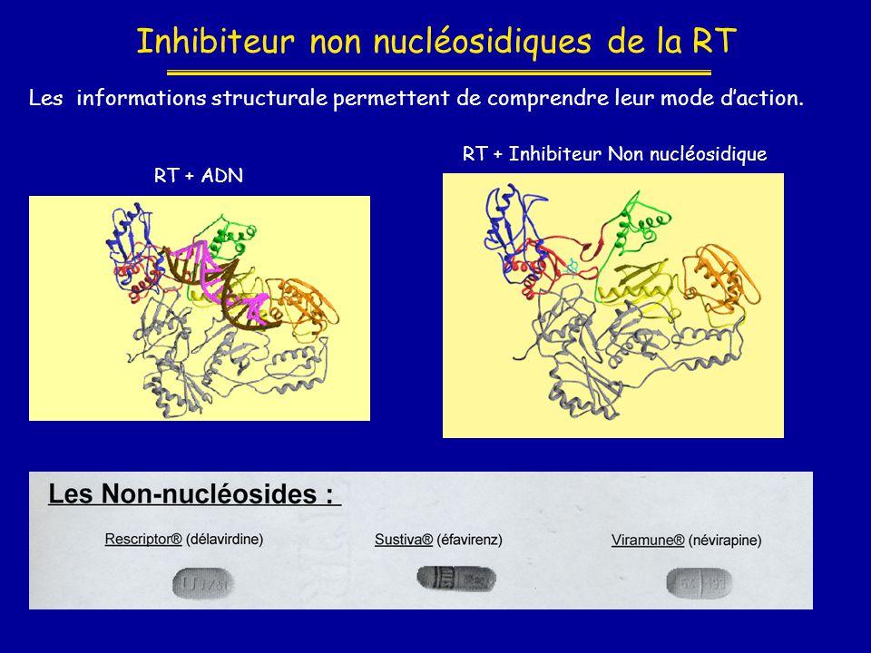 Inhibiteur non nucléosidiques de la RT RT + Inhibiteur Non nucléosidique RT + ADN Les informations structurale permettent de comprendre leur mode d'ac