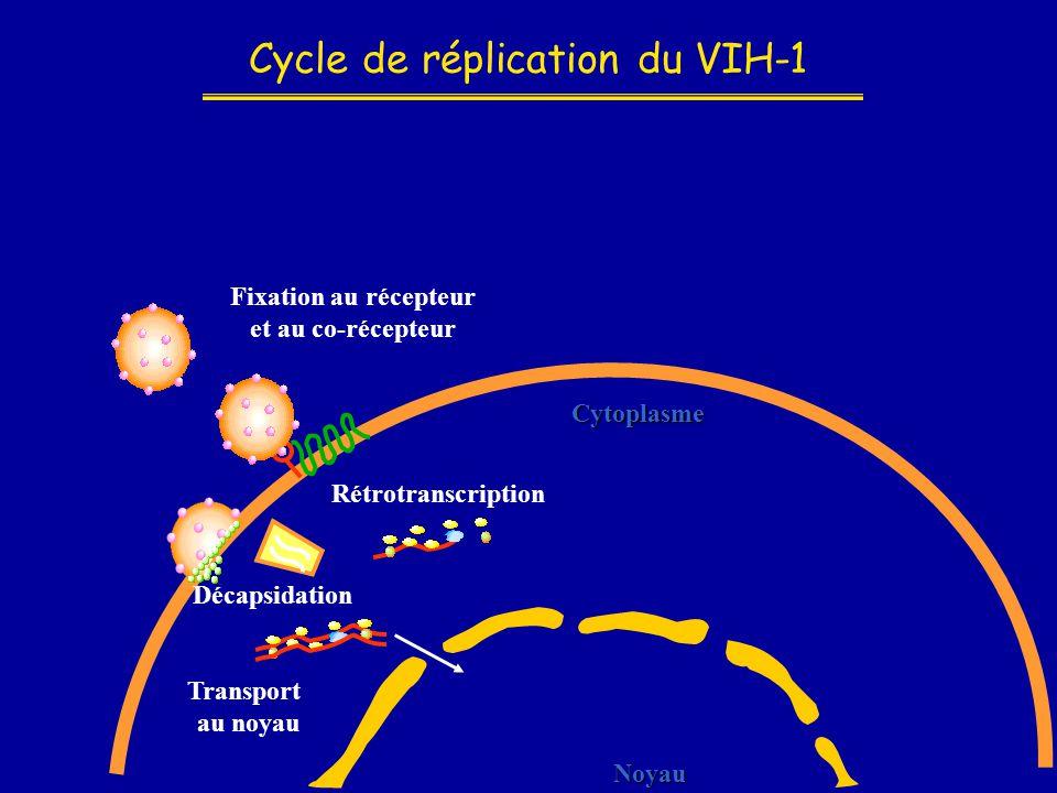 Cycle de réplication du VIH-1 Noyau Cytoplasme Fixation au récepteur et au co-récepteur Décapsidation Rétrotranscription Transport au noyau