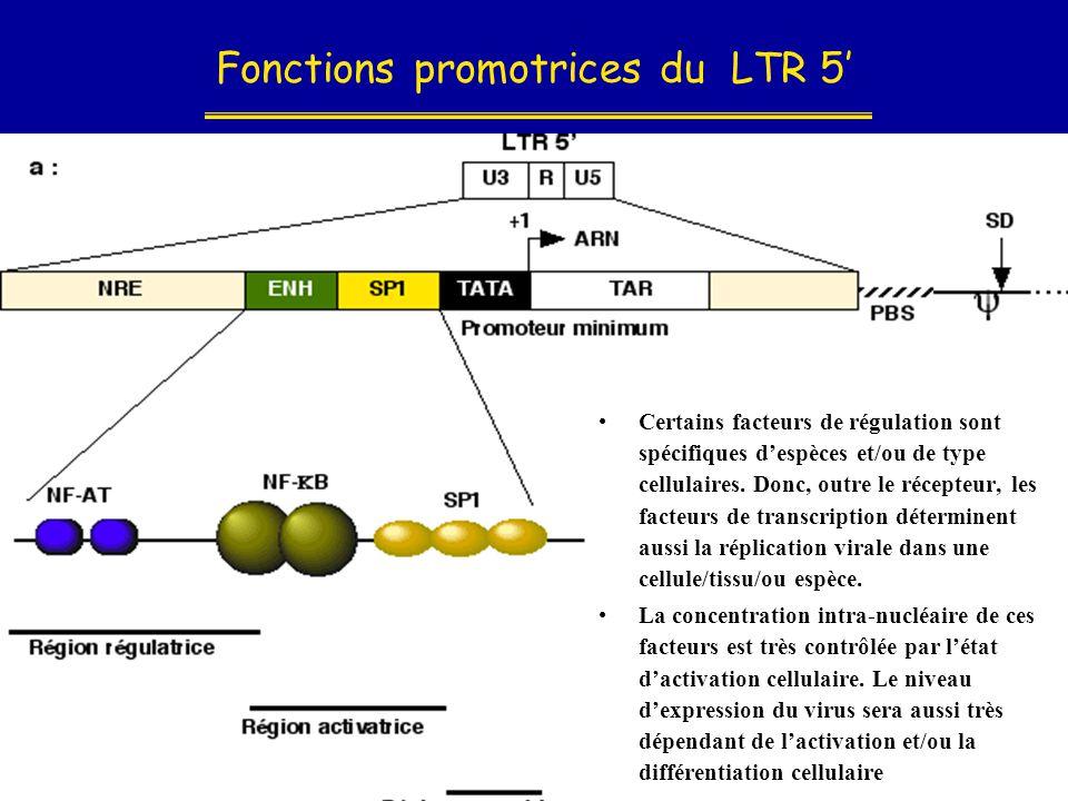 Fonctions promotrices du LTR 5' •Certains facteurs de régulation sont spécifiques d'espèces et/ou de type cellulaires. Donc, outre le récepteur, les f