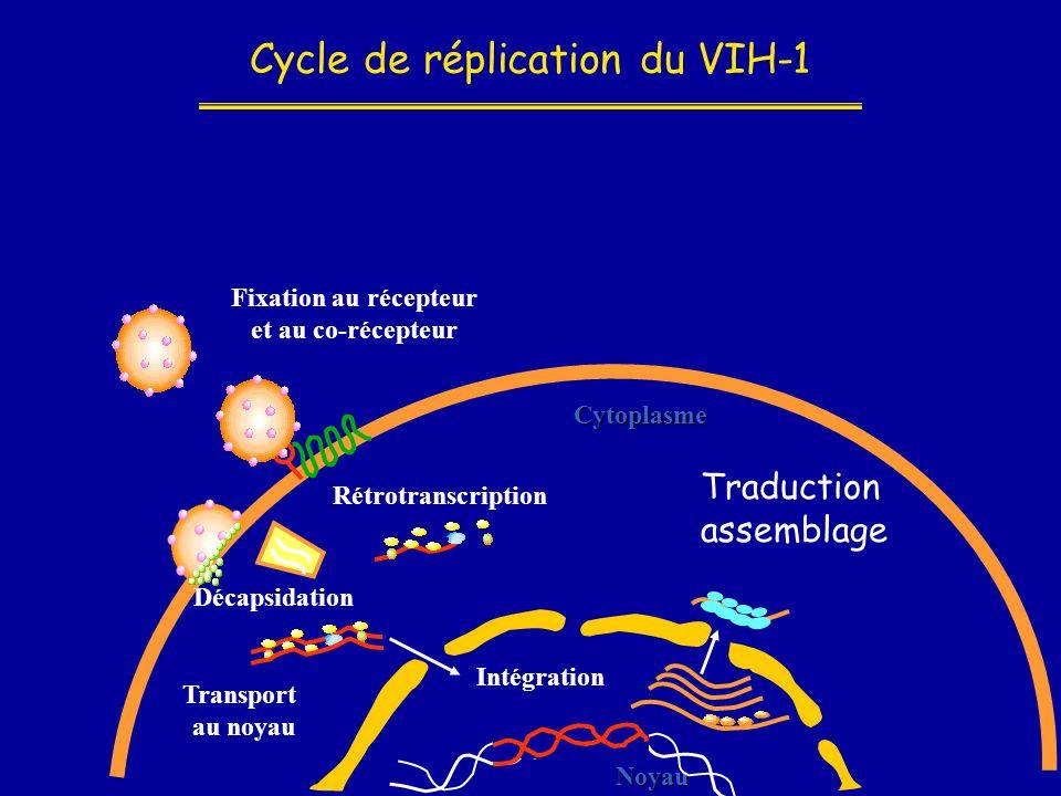 Cycle de réplication du VIH-1 Noyau Cytoplasme Fixation au récepteur et au co-récepteur Décapsidation Rétrotranscription Intégration Transport au noya