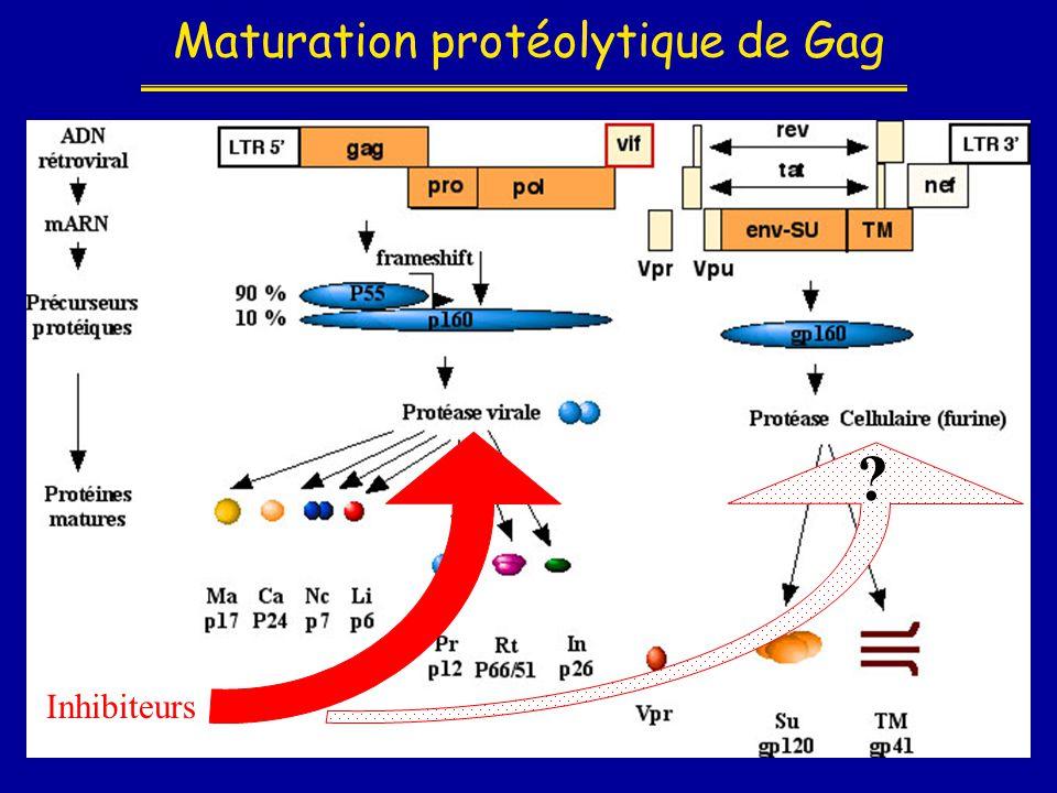 Maturation protéolytique de Gag Inhibiteurs ?