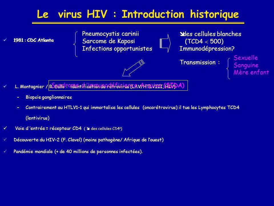 Le virus HIV : Introduction historique  1981 : CDC Atlanta 1983  L. Montagnier / R. Gallo : identification du rétrovirus (LAV/HTLVIII, HIV) –Biopsie