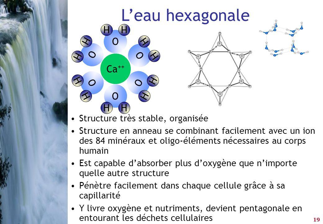 19 L'eau hexagonale •Structure très stable, organisée •Structure en anneau se combinant facilement avec un ion des 84 minéraux et oligo-éléments néces