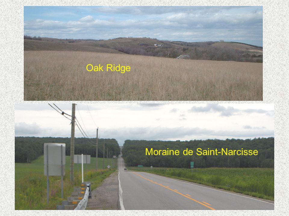 Moraine de Saint-Narcisse Oak Ridge