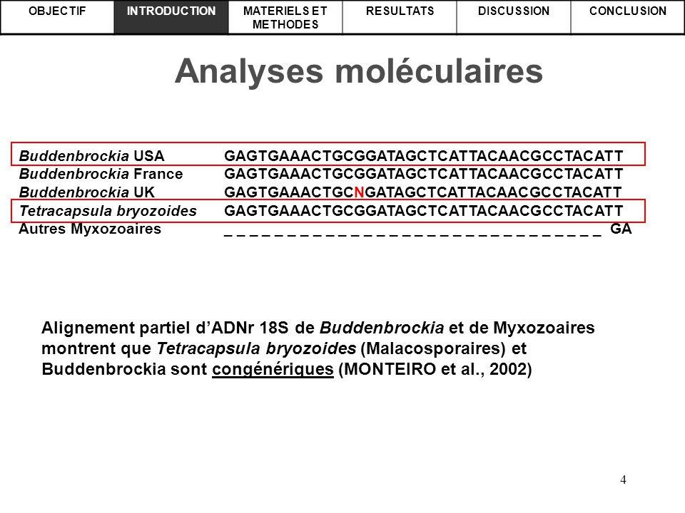 4 OBJECTIFINTRODUCTIONMATERIELS ET METHODES RESULTATSDISCUSSIONCONCLUSION Analyses moléculaires Alignement partiel d'ADNr 18S de Buddenbrockia et de M