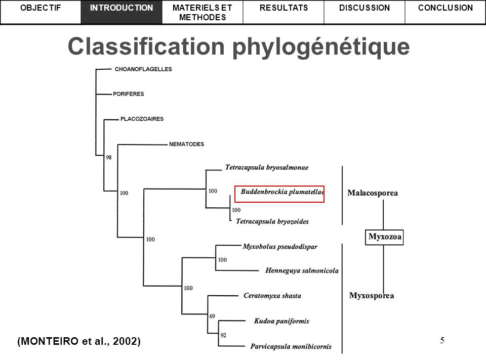 5 OBJECTIFINTRODUCTIONMATERIELS ET METHODES RESULTATSDISCUSSIONCONCLUSION Classification phylogénétique (MONTEIRO et al., 2002)