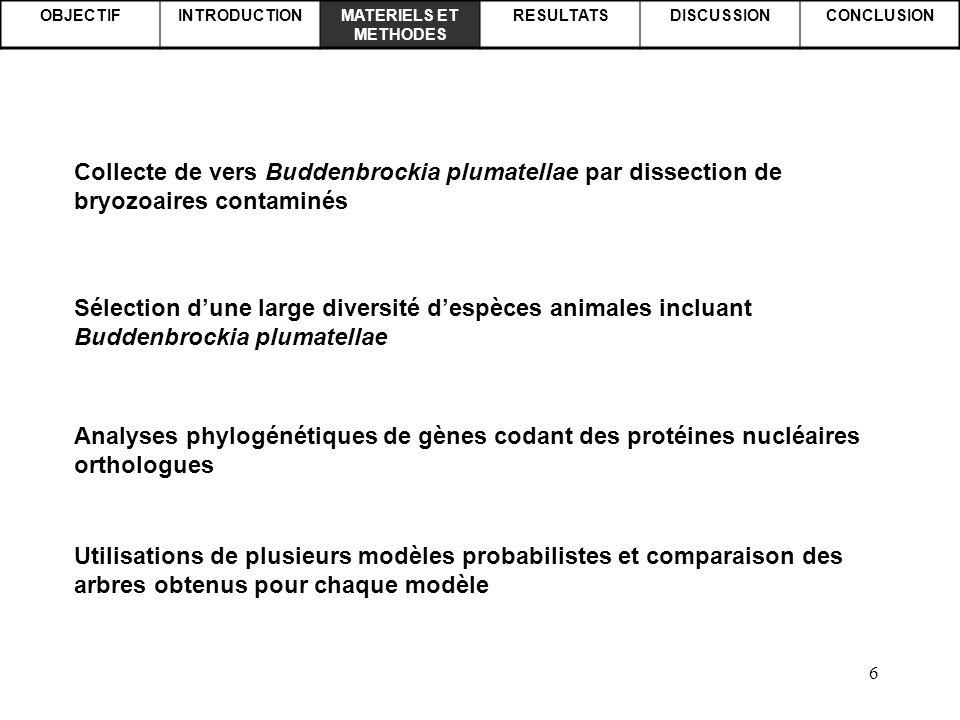 6 OBJECTIFINTRODUCTIONMATERIELS ET METHODES RESULTATSDISCUSSIONCONCLUSION Analyses phylogénétiques de gènes codant des protéines nucléaires orthologue