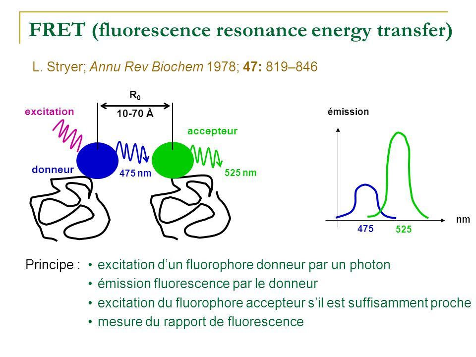 FRET (fluorescence resonance energy transfer) 525 accepteur donneur excitation 475 nm 525 nm •excitation d'un fluorophore donneur par un photon •émiss