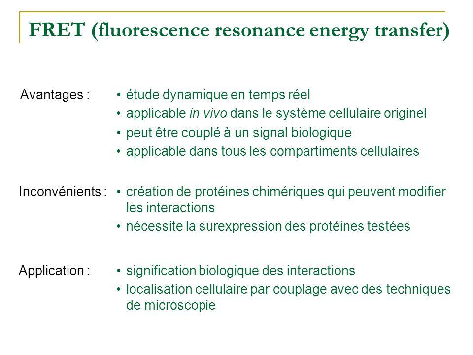 FRET (fluorescence resonance energy transfer) •étude dynamique en temps réel •applicable in vivo dans le système cellulaire originel •peut être couplé