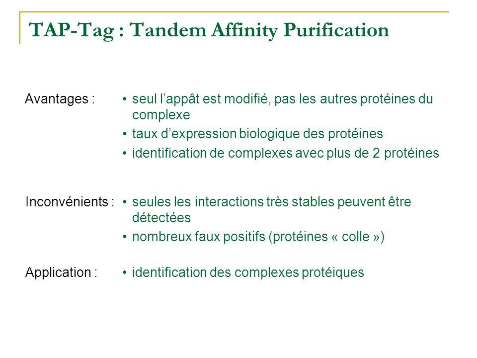 TAP-Tag : Tandem Affinity Purification •seules les interactions très stables peuvent être détectées •nombreux faux positifs (protéines « colle ») Inco