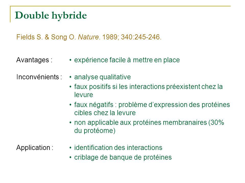 Double hybride •expérience facile à mettre en placeAvantages : •analyse qualitative •faux positifs si les interactions préexistent chez la levure •fau