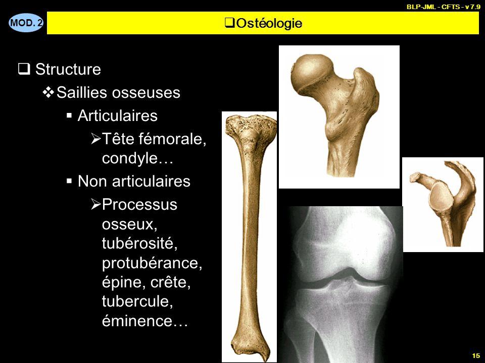 MOD. 2 BLP-JML - CFTS - v 7.9 15  Structure  Saillies osseuses  Articulaires  Tête fémorale, condyle…  Non articulaires  Processus osseux, tubér