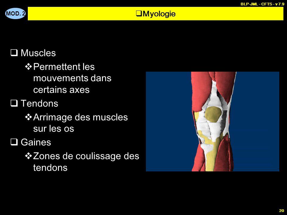 MOD. 2 BLP-JML - CFTS - v 7.9 20  Muscles  Permettent les mouvements dans certains axes  Tendons  Arrimage des muscles sur les os  Gaines  Zones