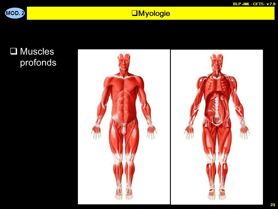 MOD. 2 BLP-JML - CFTS - v 7.9 23  Muscles profonds  Myologie