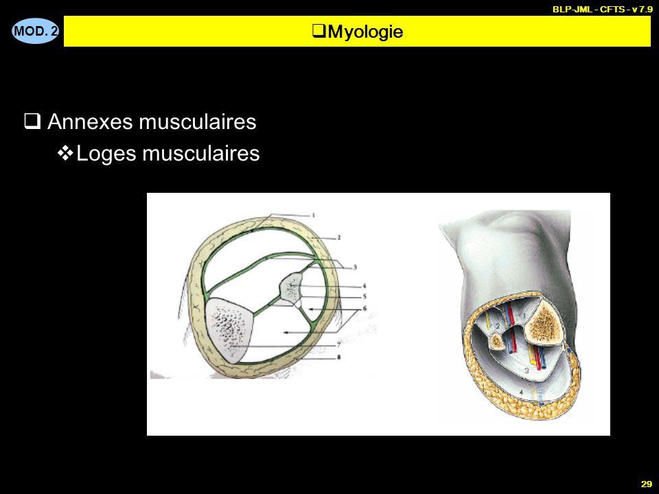 MOD. 2 BLP-JML - CFTS - v 7.9 29  Annexes musculaires  Loges musculaires  Myologie