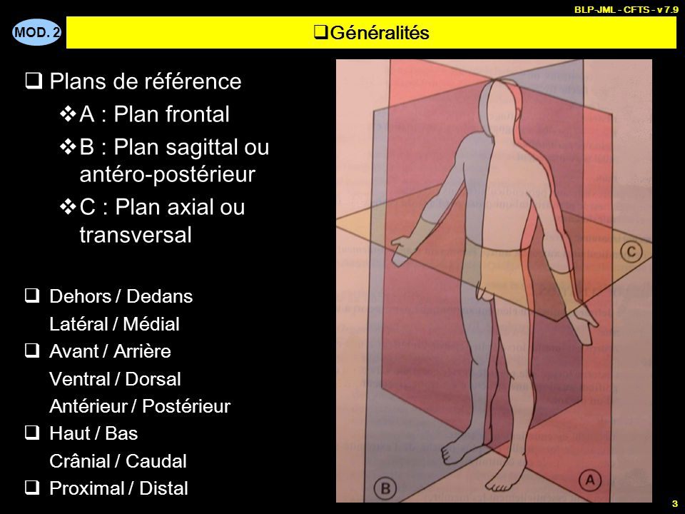 MOD. 2 BLP-JML - CFTS - v 7.9 24  Muscles profonds  Myologie