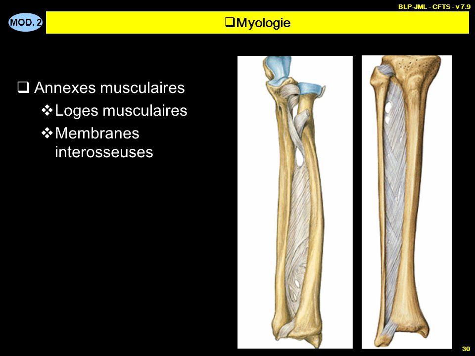 MOD. 2 BLP-JML - CFTS - v 7.9 30  Annexes musculaires  Loges musculaires  Membranes interosseuses  Myologie