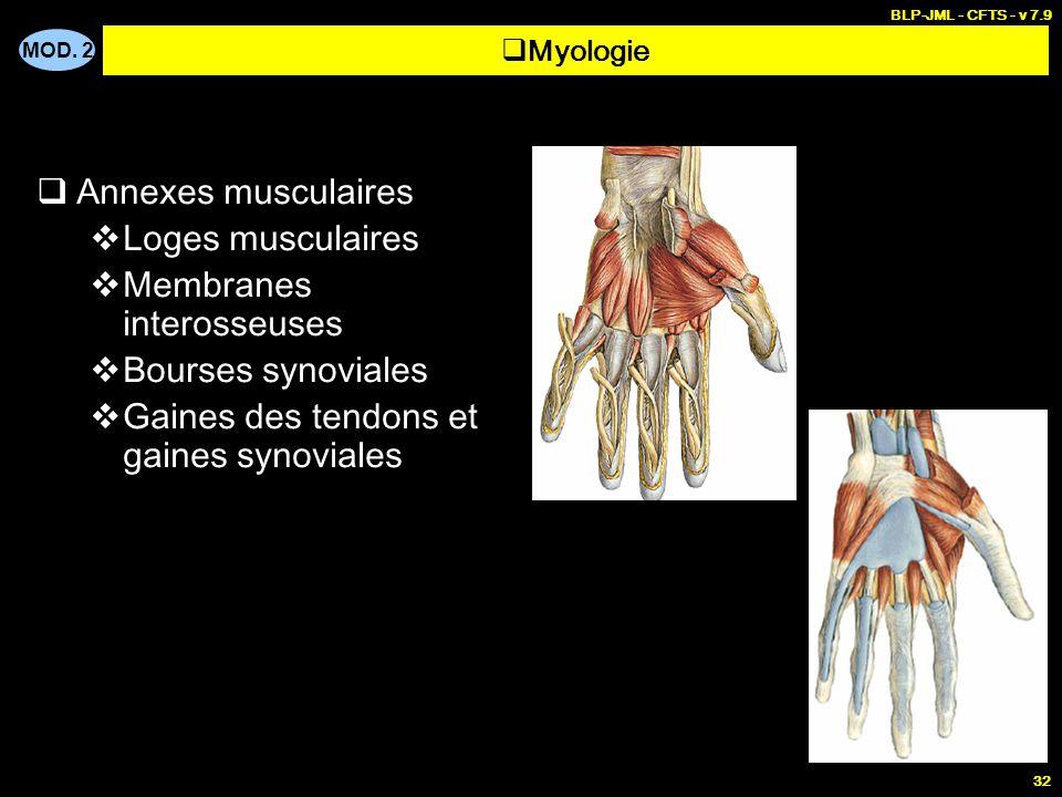 MOD. 2 BLP-JML - CFTS - v 7.9 32  Annexes musculaires  Loges musculaires  Membranes interosseuses  Bourses synoviales  Gaines des tendons et gain