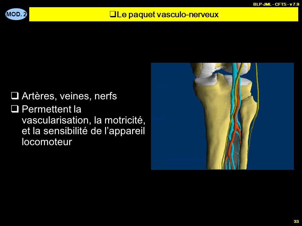 MOD. 2 BLP-JML - CFTS - v 7.9 33  Artères, veines, nerfs  Permettent la vascularisation, la motricité, et la sensibilité de l'appareil locomoteur 