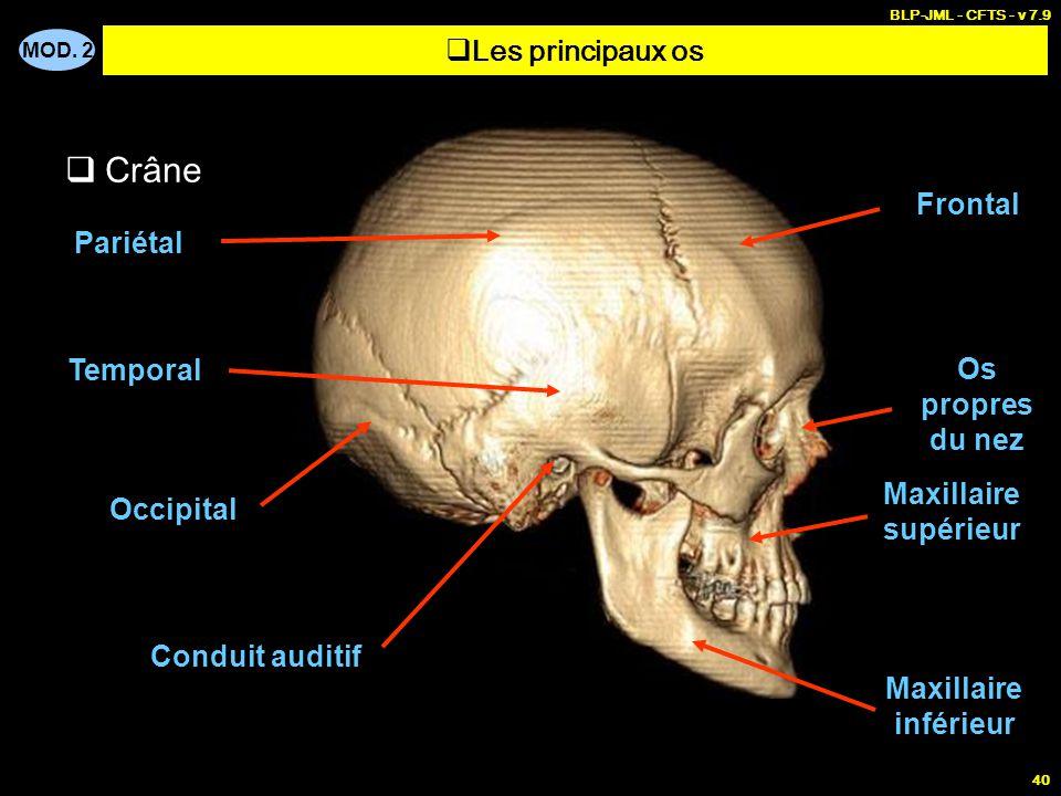 MOD. 2 BLP-JML - CFTS - v 7.9 40  Les principaux os  Crâne Frontal Os propres du nez Maxillaire supérieur Maxillaire inférieur Pariétal Temporal Occ