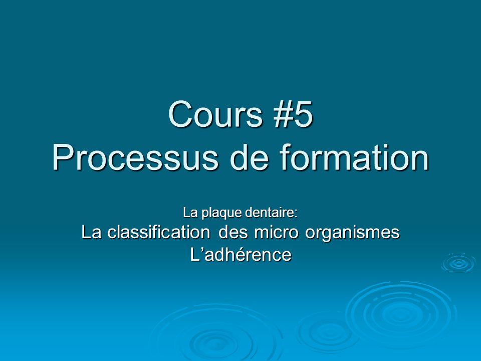 Cours #5 Processus de formation La plaque dentaire: La classification des micro organismes L'adhérence