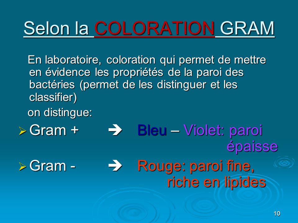 10 Selon la COLORATION GRAM En laboratoire, coloration qui permet de mettre en évidence les propriétés de la paroi des bactéries (permet de les distinguer et les classifier) on distingue: GGGGram +Bleu – Violet: paroi épaisse GGGGram -Rouge: paroi fine, riche en lipides