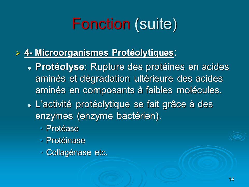 14 Fonction (suite) 4444- Microorganismes Protéolytiques: PPPProtéolyse: Rupture des protéines en acides aminés et dégradation ultérieure des acides aminés en composants à faibles molécules.