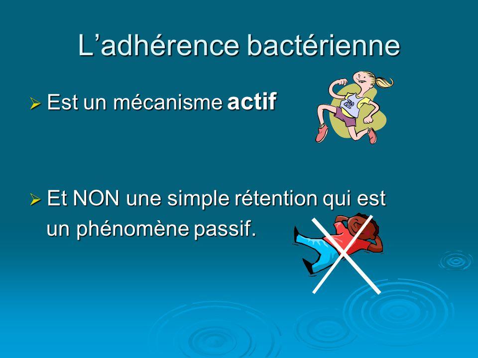 L'adhérence bactérienne  Est un mécanisme actif  Et NON une simple rétention qui est un phénomène passif.