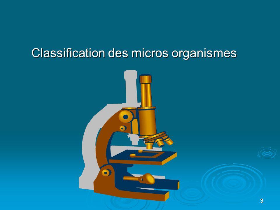 4 « La flore microbienne buccale »: La composante bactérienne de la flore buccale