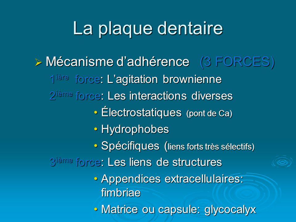 La plaque dentaire  Mécanisme d'adhérence (3 FORCES) 1 ière force: L'agitation brownienne 2 ième force: Les interactions diverses •Électrostatiques (pont de Ca) •Hydrophobes •Spécifiques ( liens forts très sélectifs) 3 ième force: Les liens de structures •Appendices extracellulaires: fimbriae •Matrice ou capsule: glycocalyx