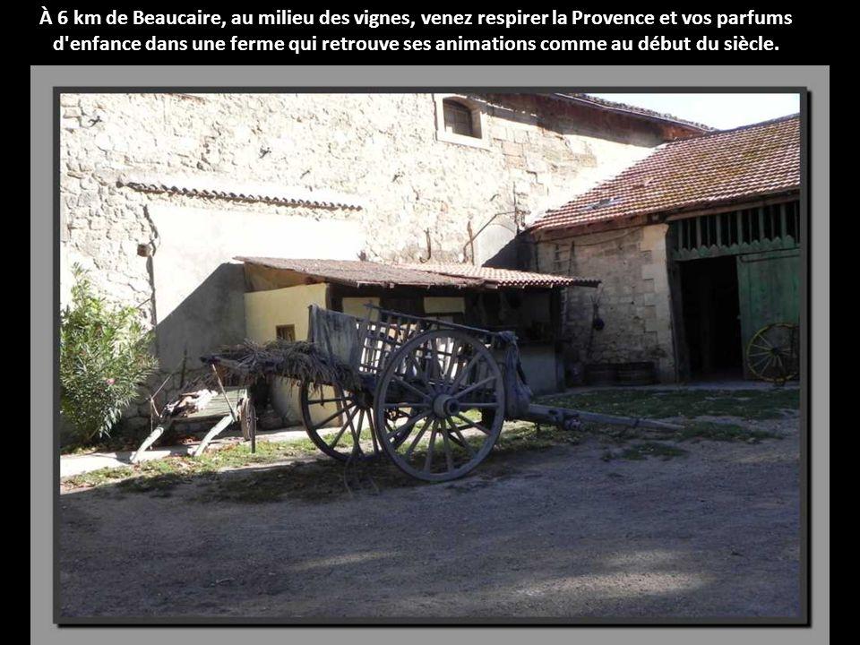 À 6 km de Beaucaire, au milieu des vignes, venez respirer la Provence et vos parfums d enfance dans une ferme qui retrouve ses animations comme au début du siècle.