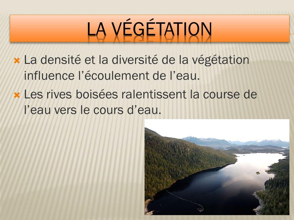  La densité et la diversité de la végétation influence l'écoulement de l'eau.  Les rives boisées ralentissent la course de l'eau vers le cours d'eau