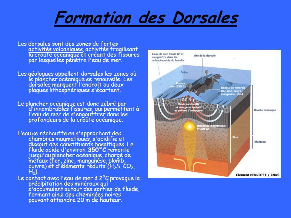 Formation des Dorsales Les dorsales sont des zones de fortes activités volcaniques, activités fragilisant la croûte océanique et créant des fissures p