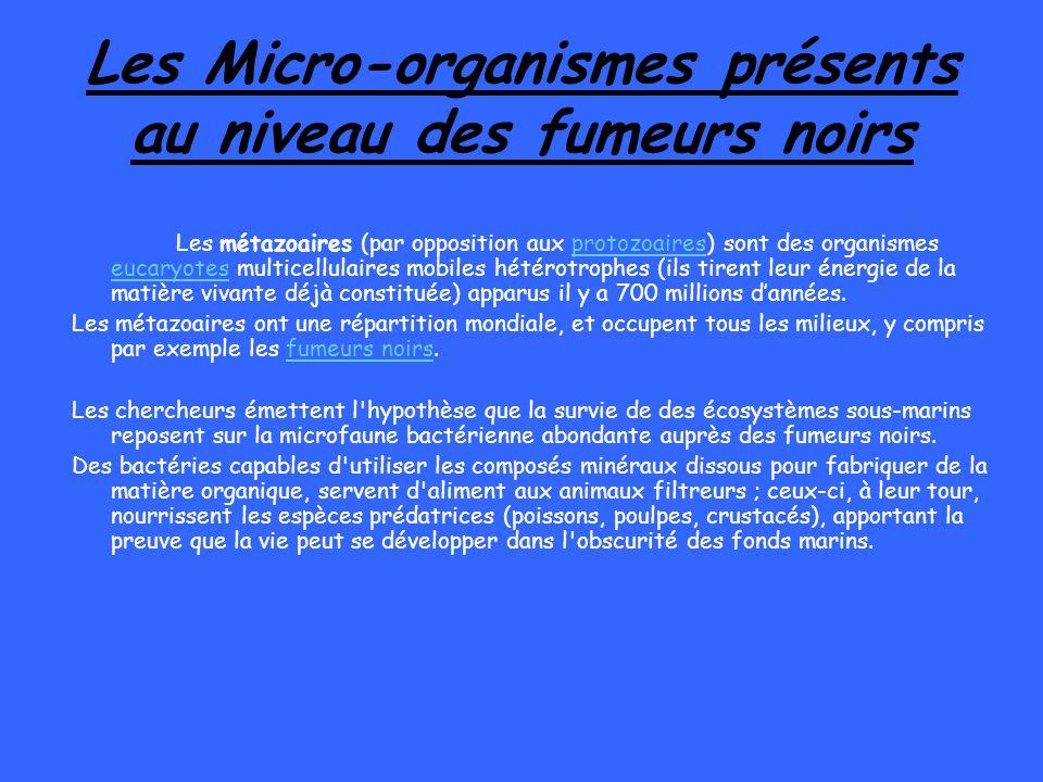 Les Micro-organismes présents au niveau des fumeurs noirs Les métazoaires (par opposition aux protozoaires) sont des organismes eucaryotes multicellul