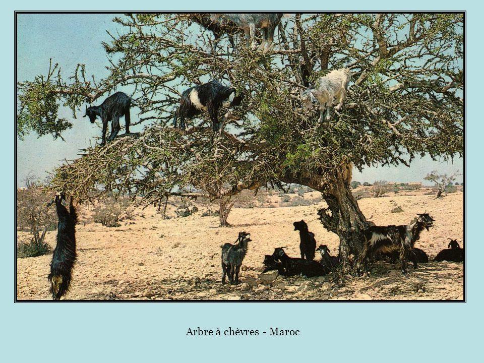 Kit main libre africain