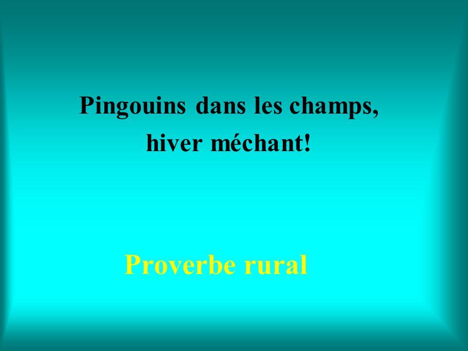 Quand le merle chante en mai, avril est passé et juin n'est pas loin! Proverbe rural