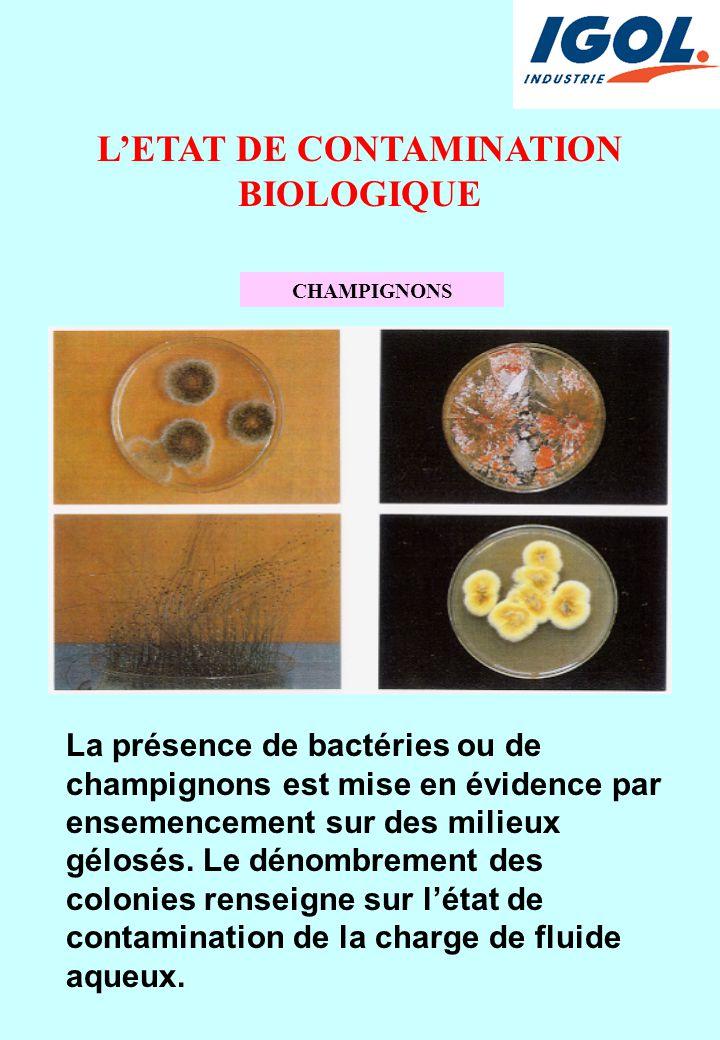 L'ETAT DE CONTAMINATION BIOLOGIQUE CHAMPIGNONS La présence de bactéries ou de champignons est mise en évidence par ensemencement sur des milieux gélos