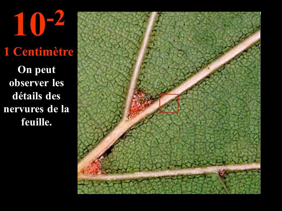 C'est une feuille de chêne. 10 -1 10 Centimètres