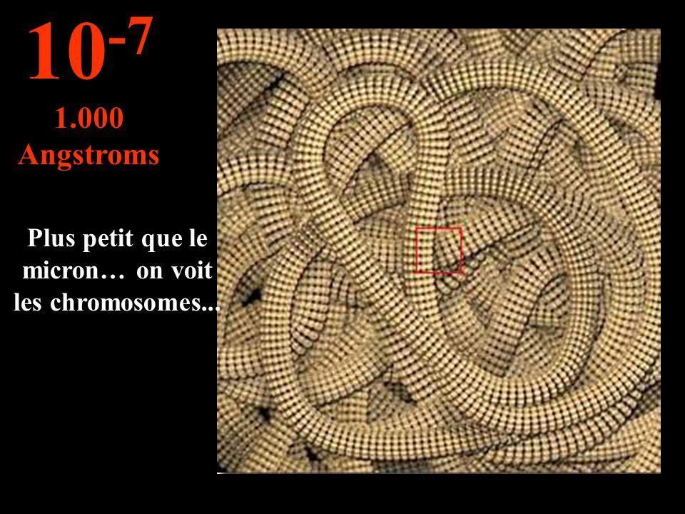 Le noyau de la cellule... 10 -6 1 micron