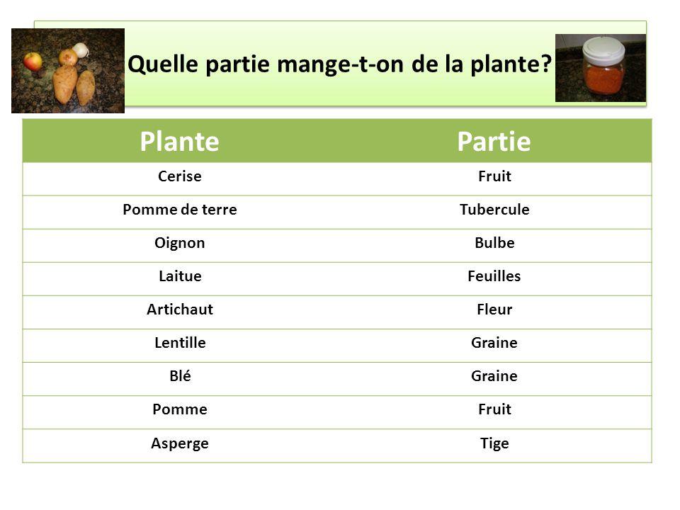 Quelle partie mange-t-on de la plante? PlantePartie CeriseFruit Pomme de terreTubercule OignonBulbe LaitueFeuilles ArtichautFleur LentilleGraine BléGr