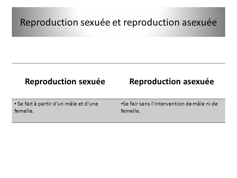 Reproduction sexuée et reproduction asexuée Reproduction sexuéeReproduction asexuée • Se fait à partir d'un mâle et d'une femelle. • Se fair sans l'in